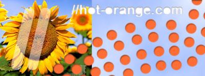 hotorange